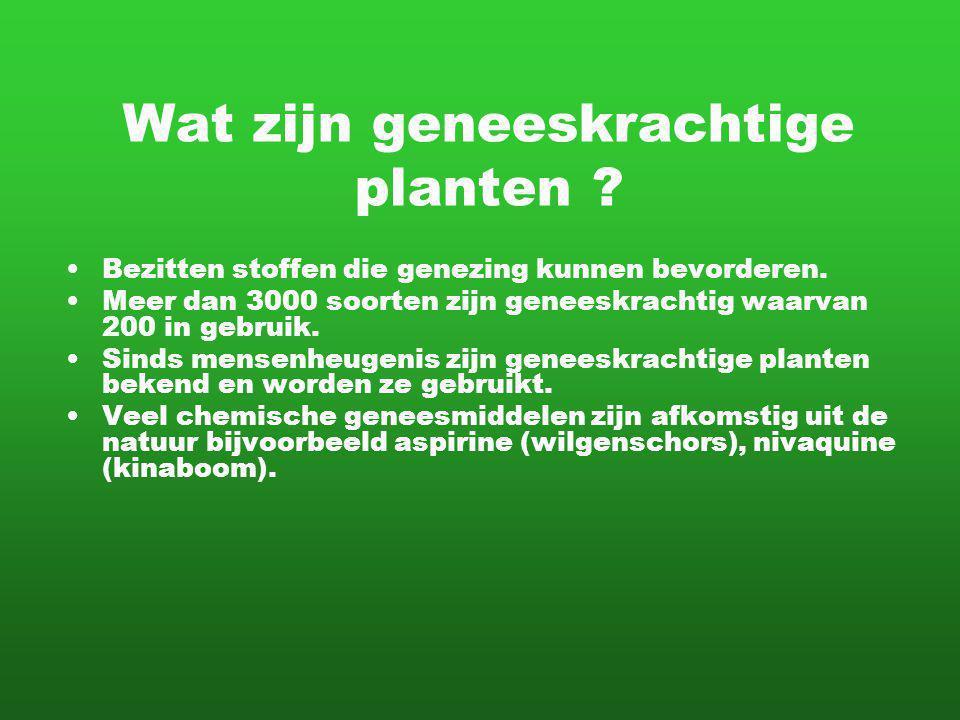 Wat zijn geneeskrachtige planten ? Bezitten stoffen die genezing kunnen bevorderen. Meer dan 3000 soorten zijn geneeskrachtig waarvan 200 in gebruik.