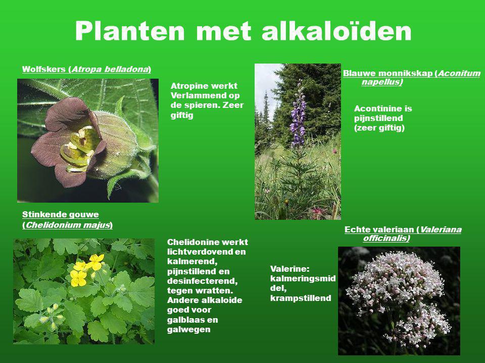 Planten met alkaloïden Blauwe monnikskap (Aconitum napellus) Chelidonine werkt lichtverdovend en kalmerend, pijnstillend en desinfecterend, tegen wratten.