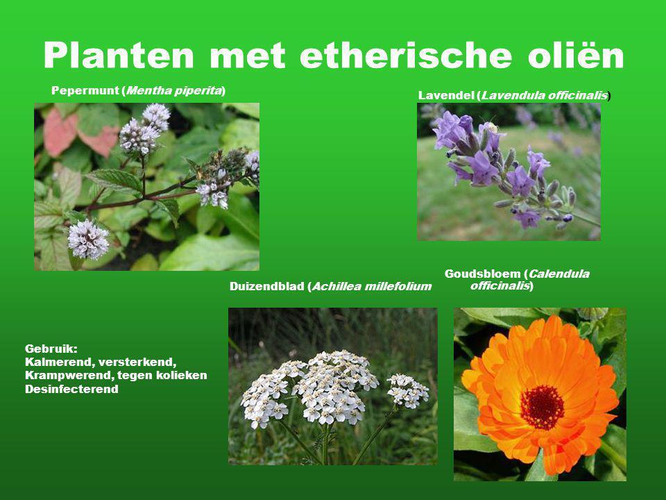 Planten met etherische oliën Lavendel (Lavendula officinalis) Pepermunt (Mentha piperita) Gebruik: Kalmerend, versterkend, Krampwerend, tegen kolieken