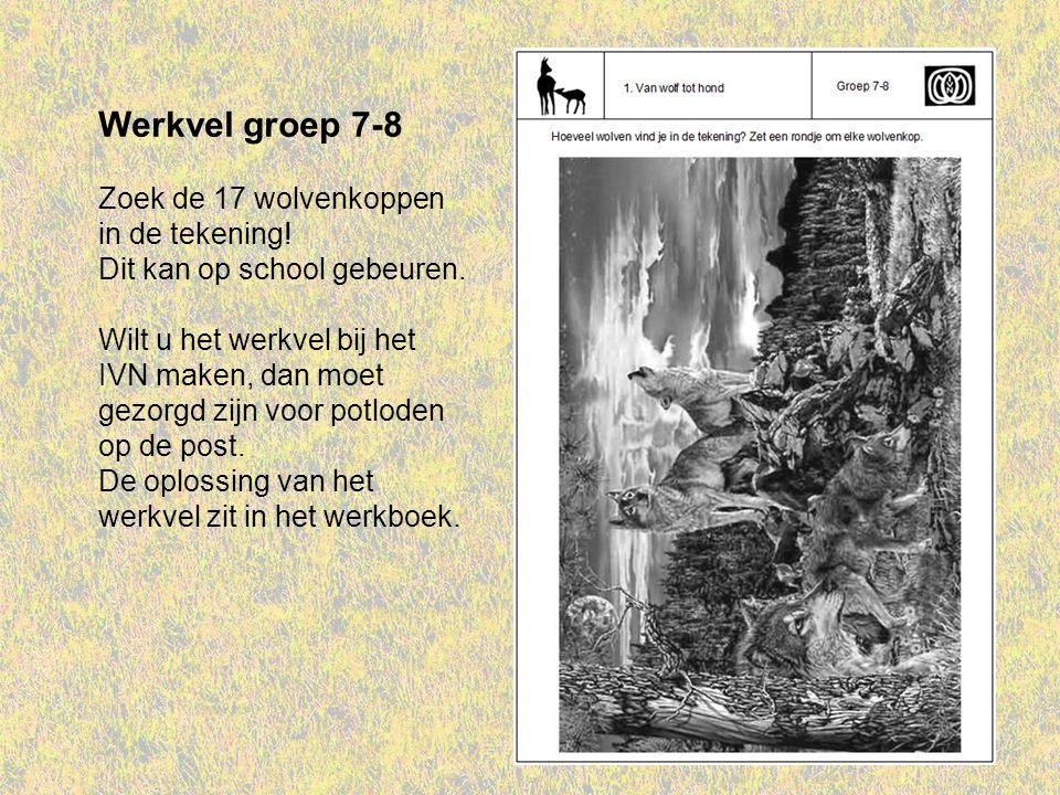 Werkvel groep 7-8 Zoek de 17 wolvenkoppen in de tekening! Dit kan op school gebeuren. Wilt u het werkvel bij het IVN maken, dan moet gezorgd zijn voor