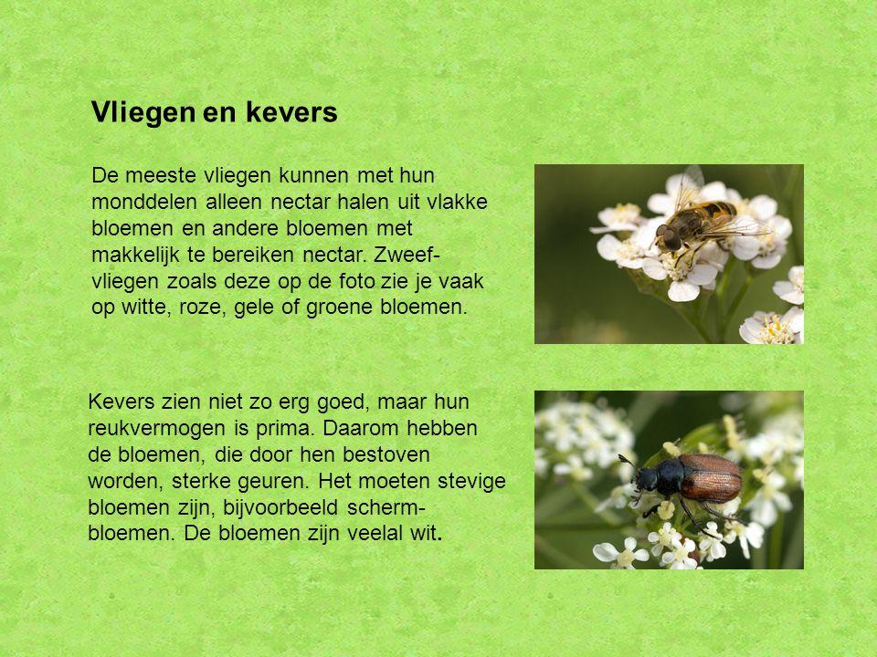 Vliegen en kevers De meeste vliegen kunnen met hun monddelen alleen nectar halen uit vlakke bloemen en andere bloemen met makkelijk te bereiken nectar.