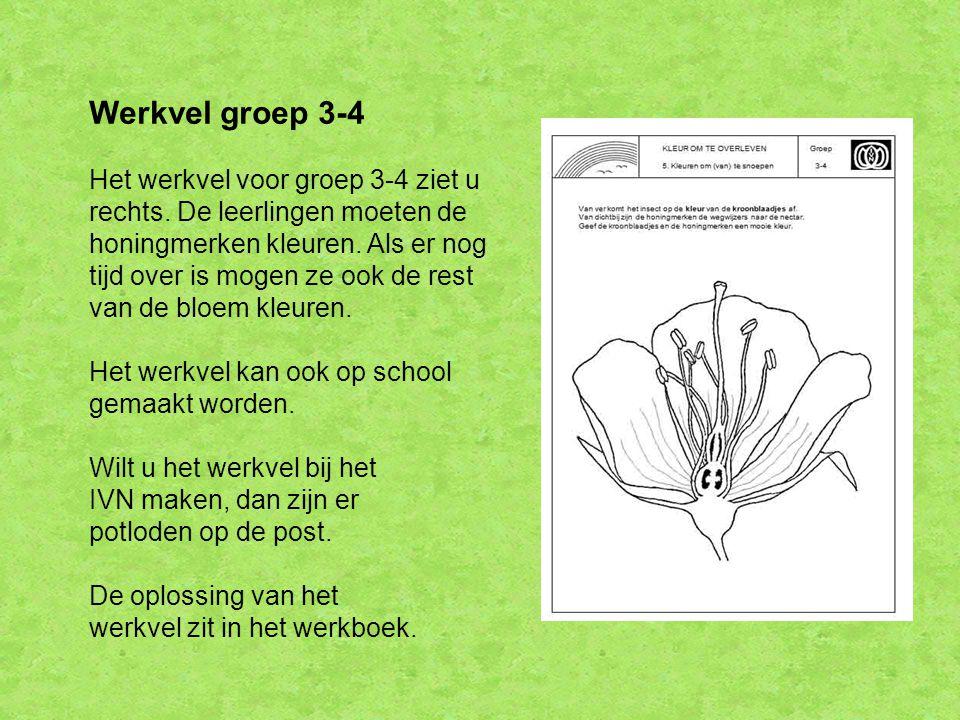 Werkvel groep 3-4 Het werkvel voor groep 3-4 ziet u rechts.