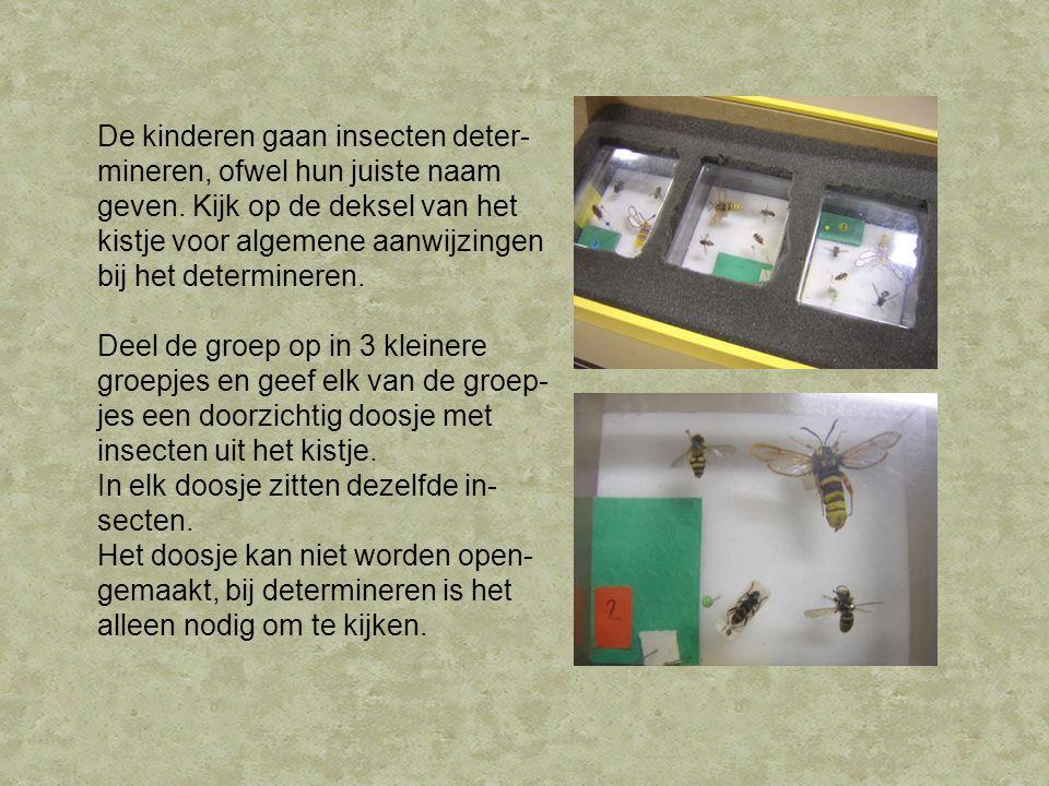 De kinderen gaan insecten deter- mineren, ofwel hun juiste naam geven. Kijk op de deksel van het kistje voor algemene aanwijzingen bij het determinere