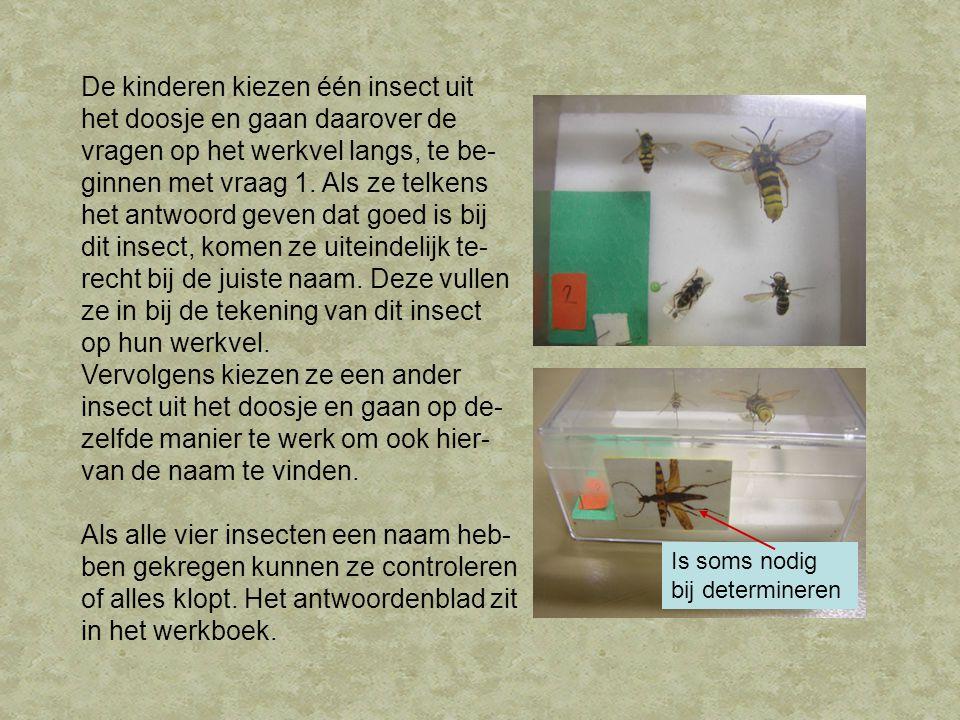 De kinderen kiezen één insect uit het doosje en gaan daarover de vragen op het werkvel langs, te be- ginnen met vraag 1. Als ze telkens het antwoord g