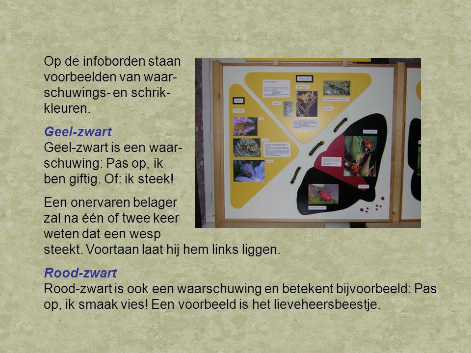 Op de infoborden staan voorbeelden van waar- schuwings- en schrik- kleuren. Geel-zwart Geel-zwart is een waar- schuwing: Pas op, ik ben giftig. Of: ik