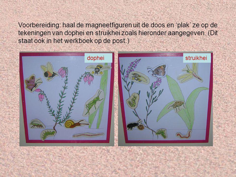 Voorbereiding: haal de magneetfiguren uit de doos en 'plak' ze op de tekeningen van dophei en struikhei zoals hieronder aangegeven.