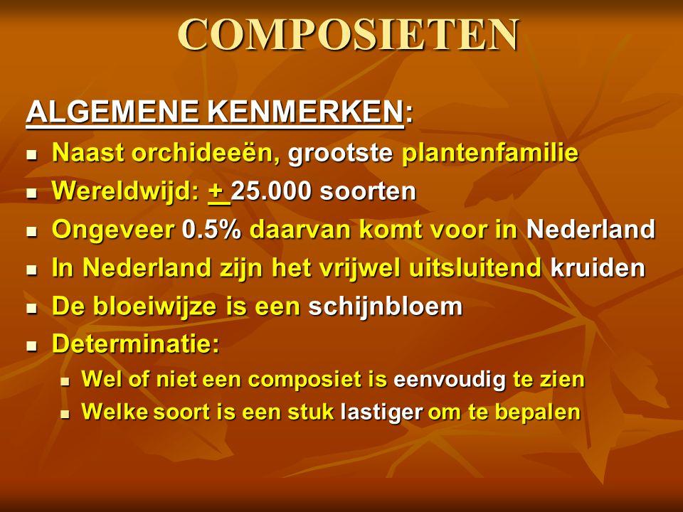 COMPOSIETEN ALGEMENE KENMERKEN: Naast orchideeën, grootste plantenfamilie Naast orchideeën, grootste plantenfamilie Wereldwijd: + 25.000 soorten Wereldwijd: + 25.000 soorten Ongeveer 0.5% daarvan komt voor in Nederland Ongeveer 0.5% daarvan komt voor in Nederland In Nederland zijn het vrijwel uitsluitend kruiden In Nederland zijn het vrijwel uitsluitend kruiden De bloeiwijze is een schijnbloem De bloeiwijze is een schijnbloem Determinatie: Determinatie: Wel of niet een composiet is eenvoudig te zien Wel of niet een composiet is eenvoudig te zien Welke soort is een stuk lastiger om te bepalen Welke soort is een stuk lastiger om te bepalen