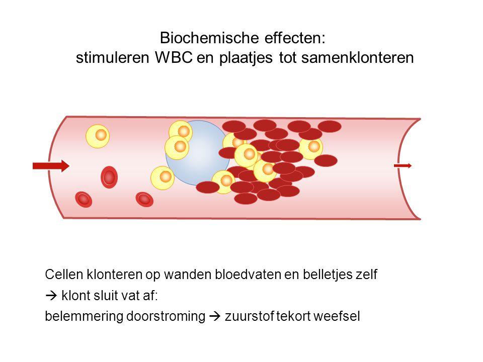 Cellen klonteren op wanden bloedvaten en belletjes zelf  klont sluit vat af: belemmering doorstroming  zuurstof tekort weefsel Biochemische effecten