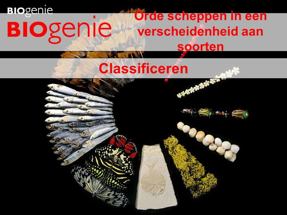 Classificeren Orde scheppen in een verscheidenheid aan soorten