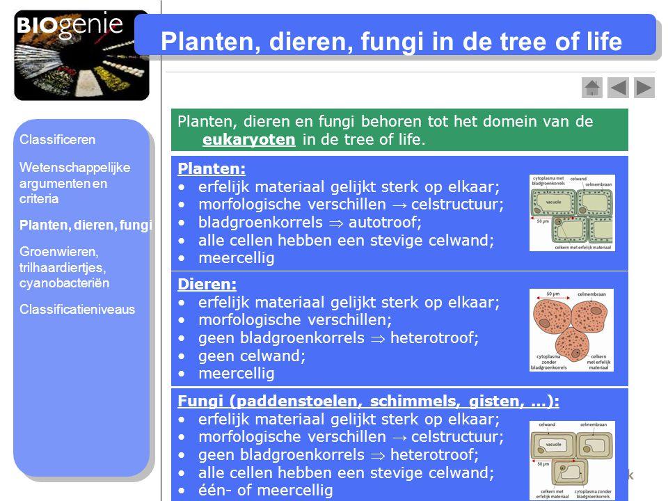 Planten, dieren, fungi in de tree of life Planten, dieren en fungi behoren tot het domein van de eukaryoten in de tree of life. Planten: erfelijk mate