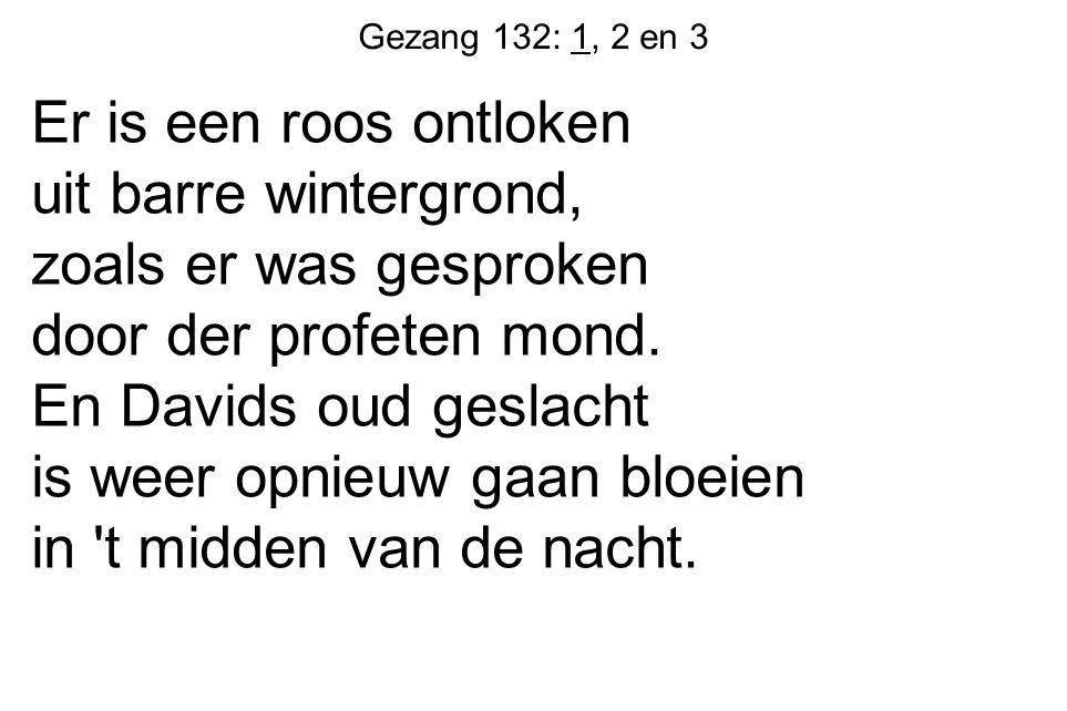 Gezang 132: 1, 2 en 3 Er is een roos ontloken uit barre wintergrond, zoals er was gesproken door der profeten mond.