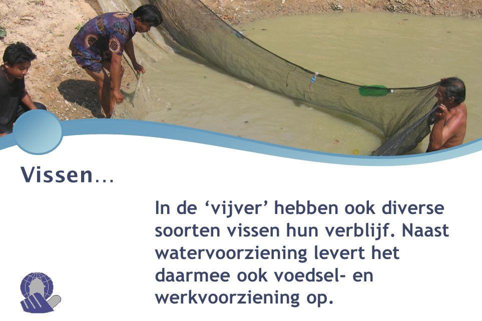 Vissen… In de 'vijver' hebben ook diverse soorten vissen hun verblijf. Naast watervoorziening levert het daarmee ook voedsel- en werkvoorziening op.
