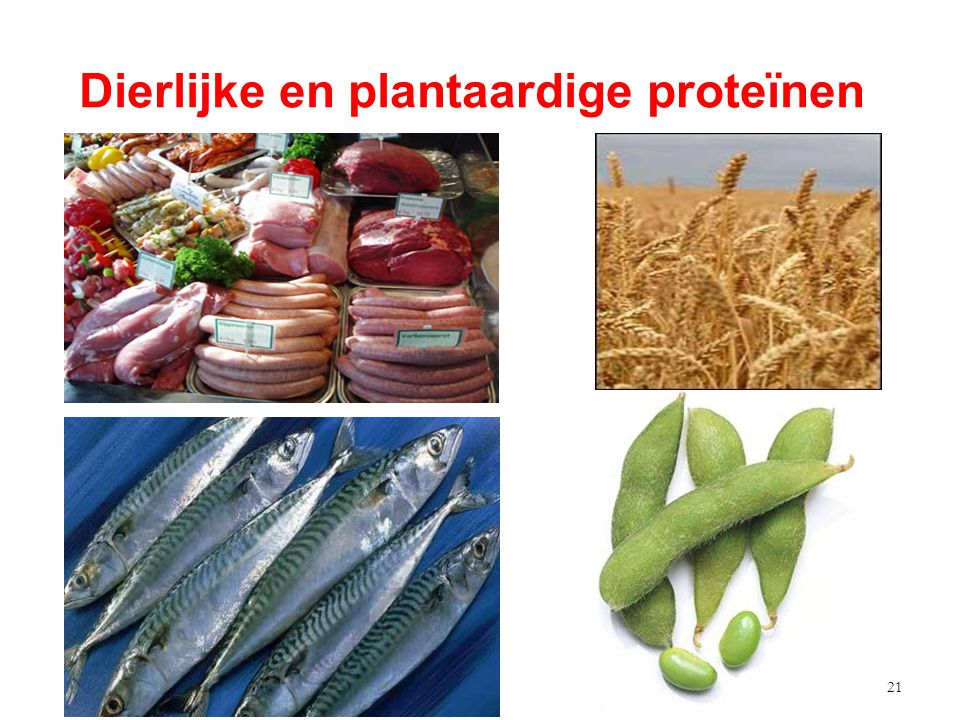 22 Meer plantaardig eiwit