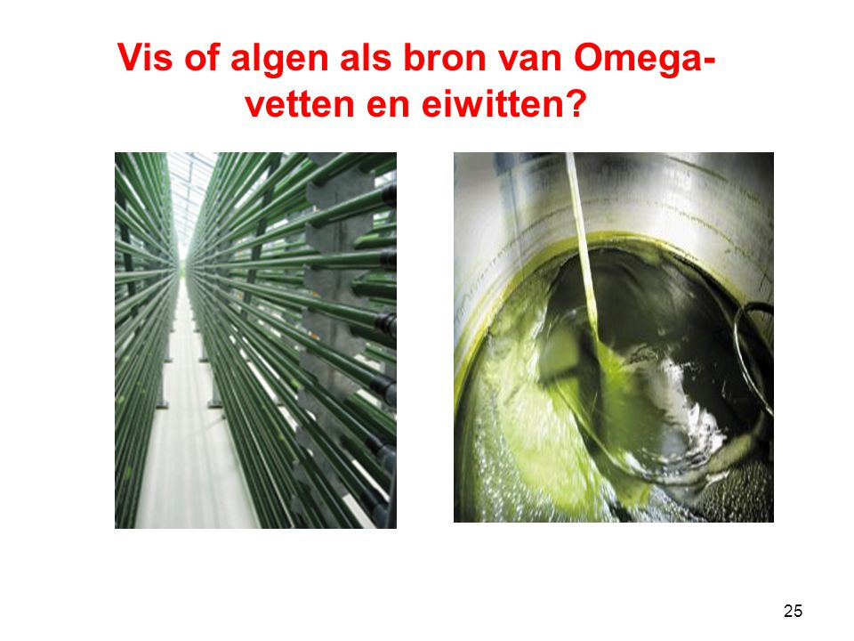 25 Vis of algen als bron van Omega- vetten en eiwitten?