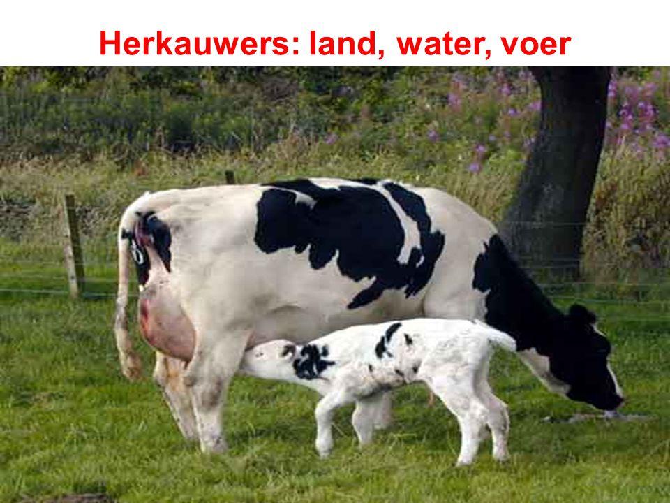 Herkauwers: land, water, voer