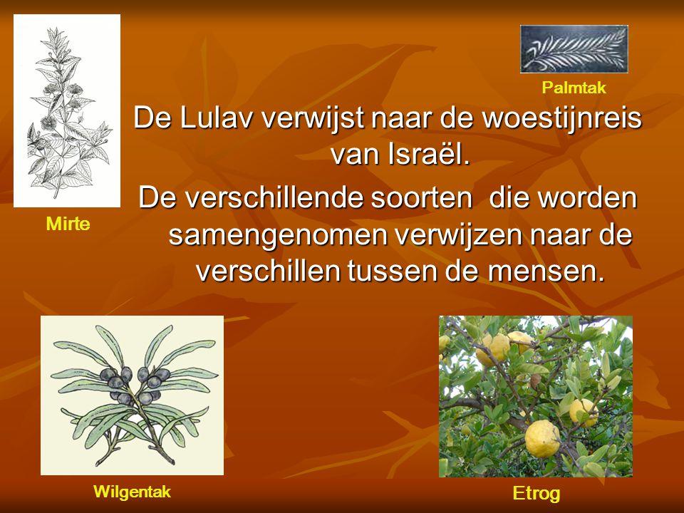 De Lulav De lulav wordt samengesteld om het oogstaspect van het feest te symboliseren.