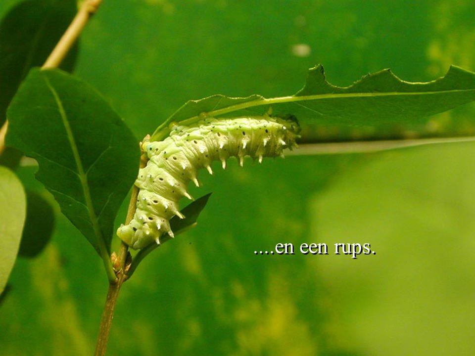 Maar inplaats daarvan gaf God hem een cactus....