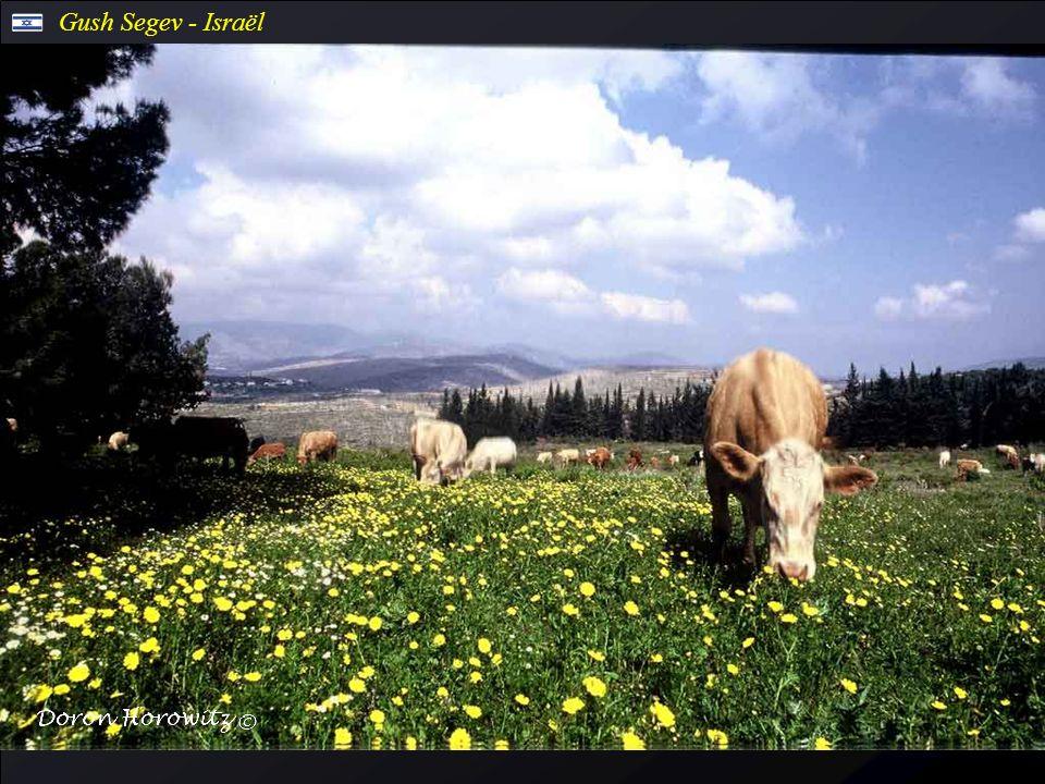 Dan Nature Reserve - Israël