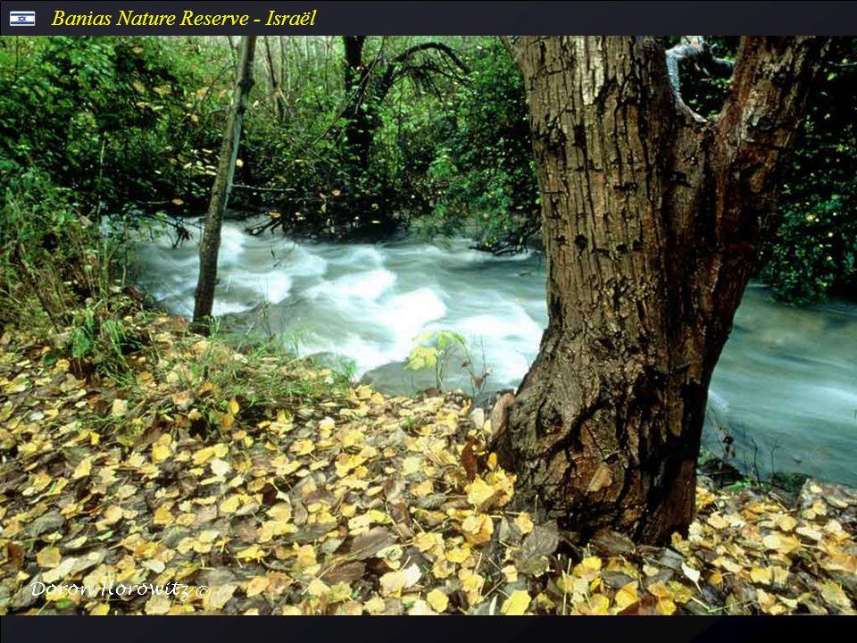 Banias Nature Reserve - Israël