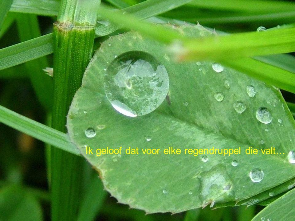 Ik geloof dat voor elke regendruppel die valt…