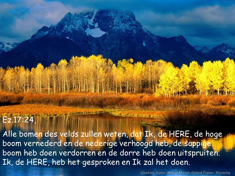 Ez.17:24, Alle bomen des velds zullen weten, dat Ik, de HERE, de hoge boom vernederd en de nederige verhoogd heb, de sappige boom heb doen verdorren en de dorre heb doen uitspruiten.