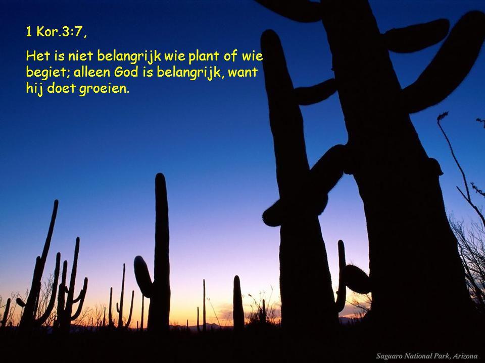 1 Kor.3:7, Het is niet belangrijk wie plant of wie begiet; alleen God is belangrijk, want hij doet groeien.