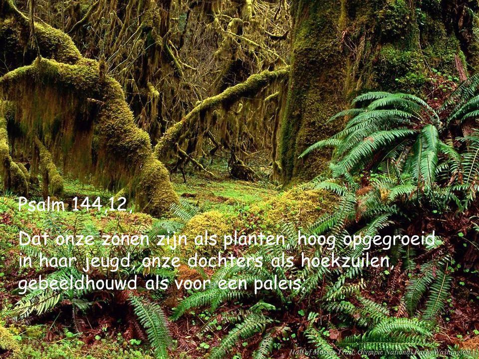 Psalm 144,12, Dat onze zonen zijn als planten, hoog opgegroeid in haar jeugd, onze dochters als hoekzuilen, gebeeldhouwd als voor een paleis;