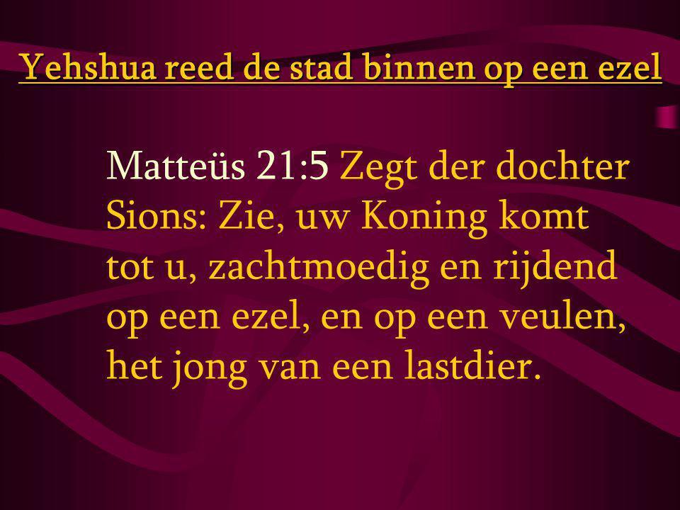 Matteüs 21:5 Zegt der dochter Sions: Zie, uw Koning komt tot u, zachtmoedig en rijdend op een ezel, en op een veulen, het jong van een lastdier.