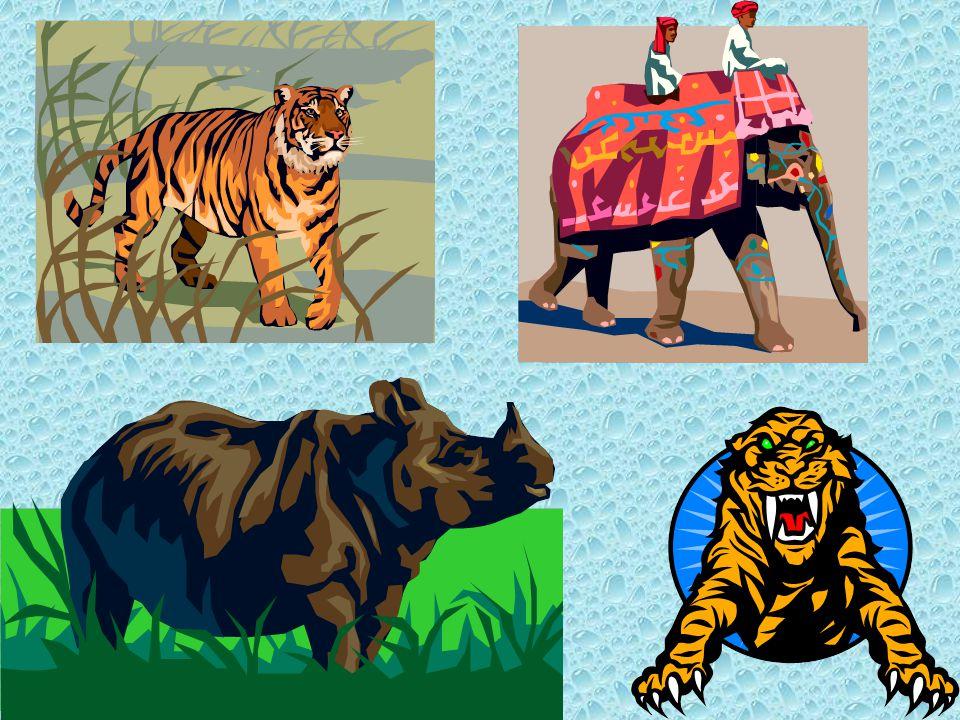 Waar leeft de Bengaalse tijger? ……in het tropisch regenwoud van India