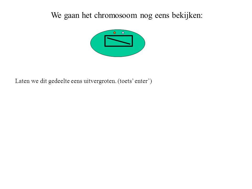 Het chromosoom bestaat dus uit twee lange strengen van nucleotiden.