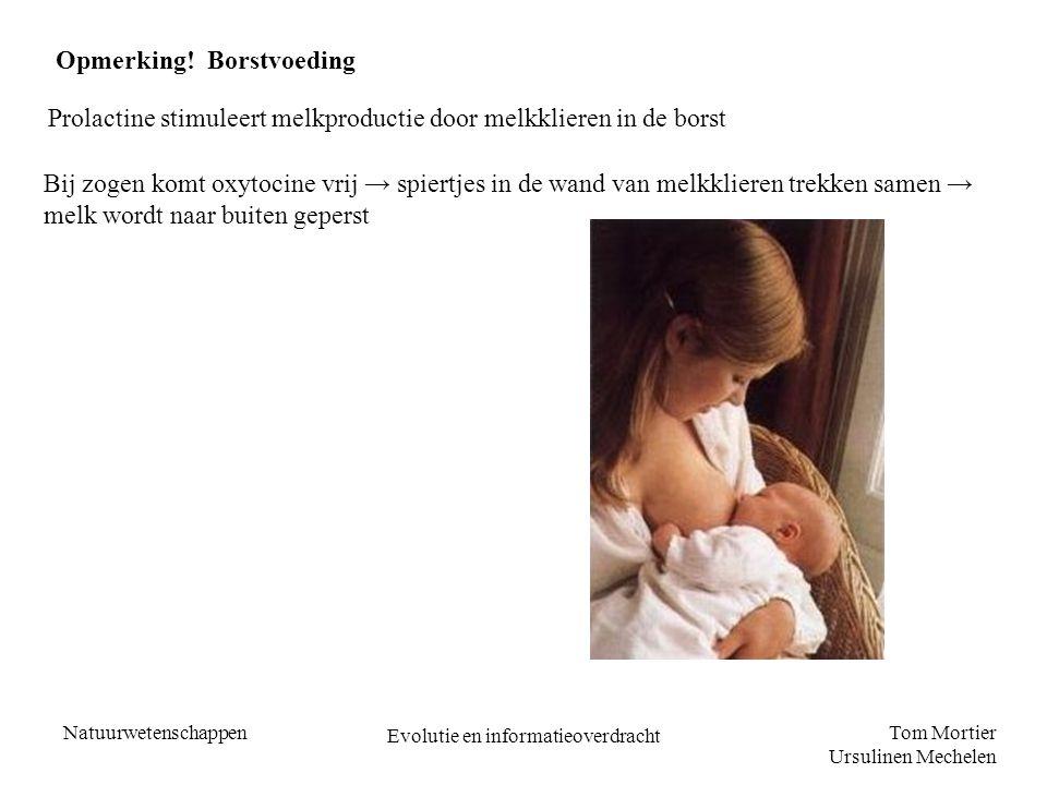 Tom Mortier Ursulinen Mechelen Natuurwetenschappen Evolutie en informatieoverdracht Opmerking! Borstvoeding Prolactine stimuleert melkproductie door m