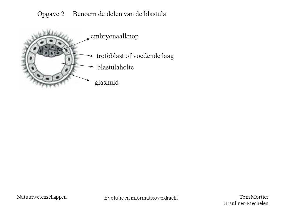 Tom Mortier Ursulinen Mechelen Natuurwetenschappen Evolutie en informatieoverdracht Opgave 2 Benoem de delen van de blastula embryonaalknop trofoblast