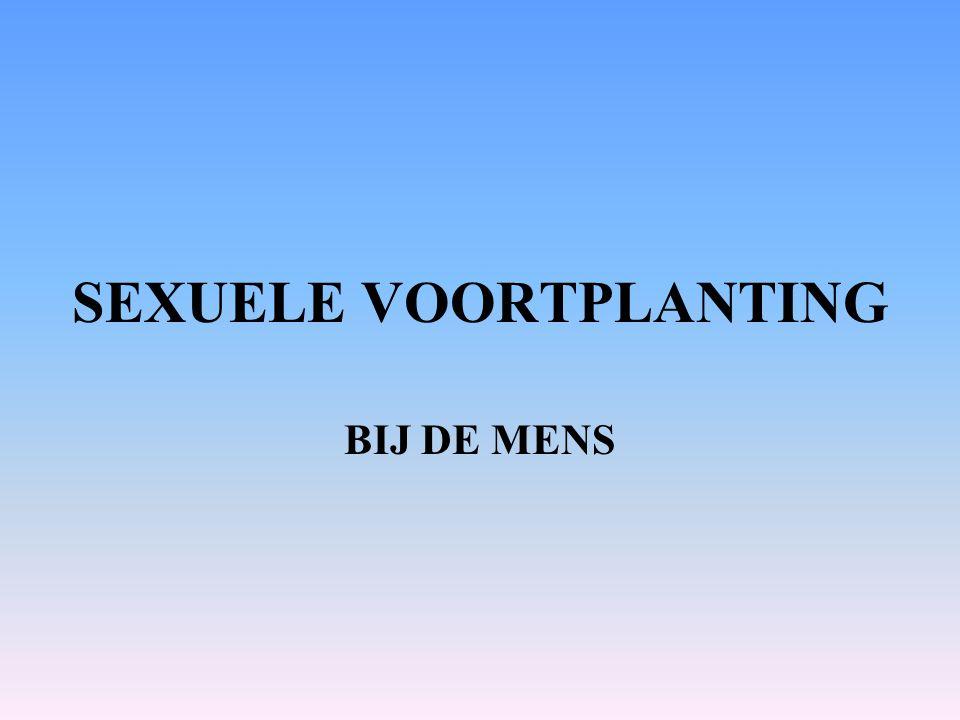SEXUELE VOORTPLANTING BIJ DE MENS