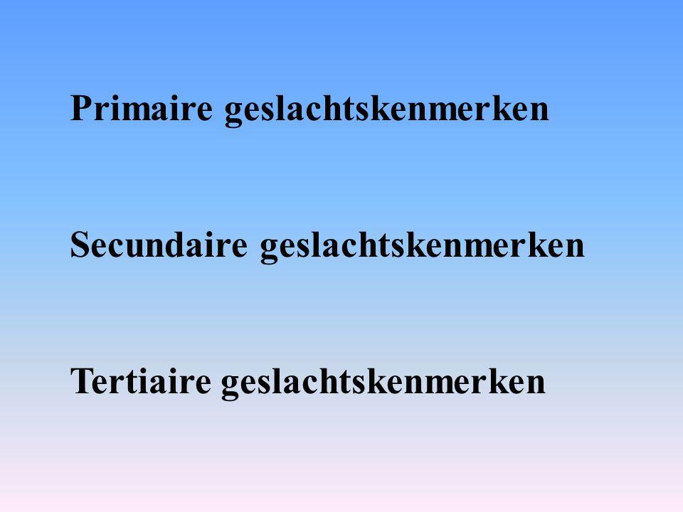 Primaire geslachtskenmerken Secundaire geslachtskenmerken Tertiaire geslachtskenmerken