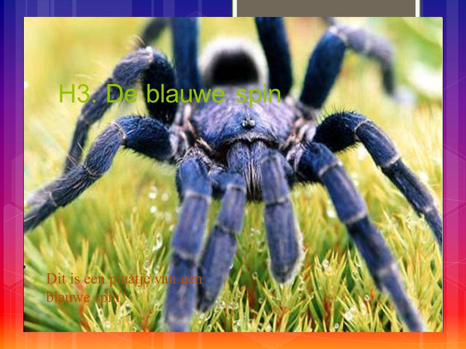 H3. De blauwe spin  Dit is een plaatje van een blauwe spin