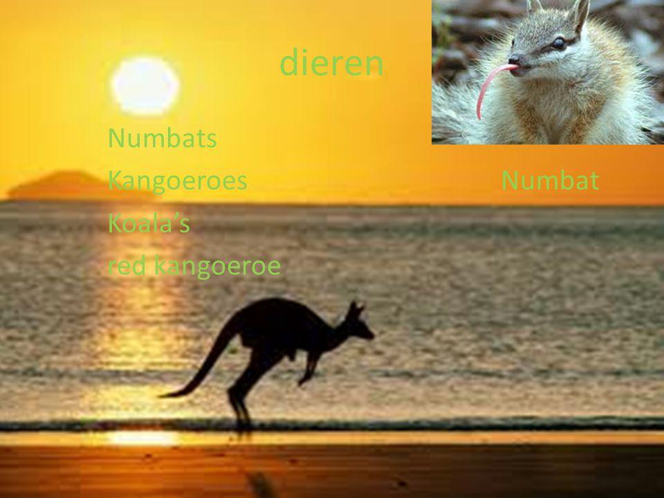 landschap Ayers rock, Australië berg Fraser Island, Australië strand Sandy dessert, Australië woestijn