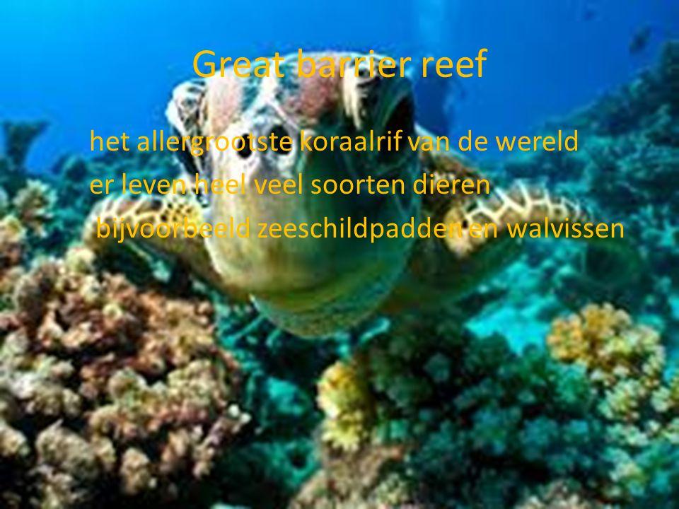 Great barrier reef het allergrootste koraalrif van de wereld er leven heel veel soorten dieren bijvoorbeeld zeeschildpadden en walvissen