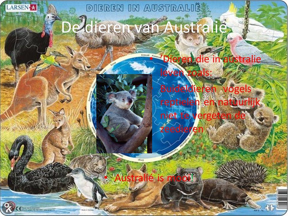 De dieren van Australié Australié is mooi.