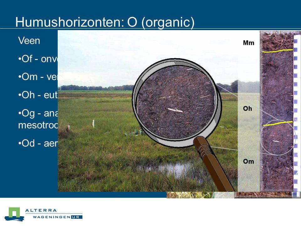 Humushorizonten: O (organic) Veen Of - onverweerd Om - verweerd Oh - eutroof veraard Og - anaeroob veraard mesotroof Od - aeroob oligotroof veraard