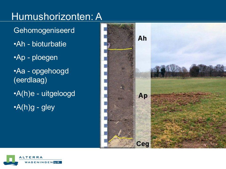 Humushorizonten: A Gehomogeniseerd Ah - bioturbatie Ap - ploegen Aa - opgehoogd (eerdlaag) A(h)e - uitgeloogd A(h)g - gley