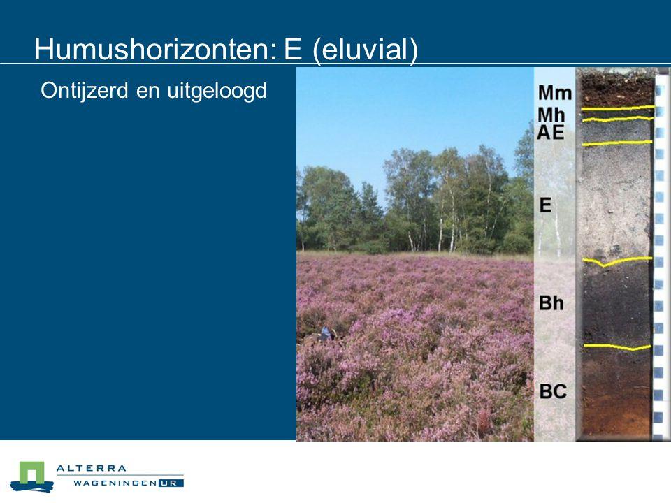 Humushorizonten: E (eluvial) Ontijzerd en uitgeloogd