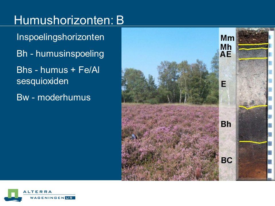 Humushorizonten: B Inspoelingshorizonten Bh - humusinspoeling Bhs - humus + Fe/Al sesquioxiden Bw - moderhumus