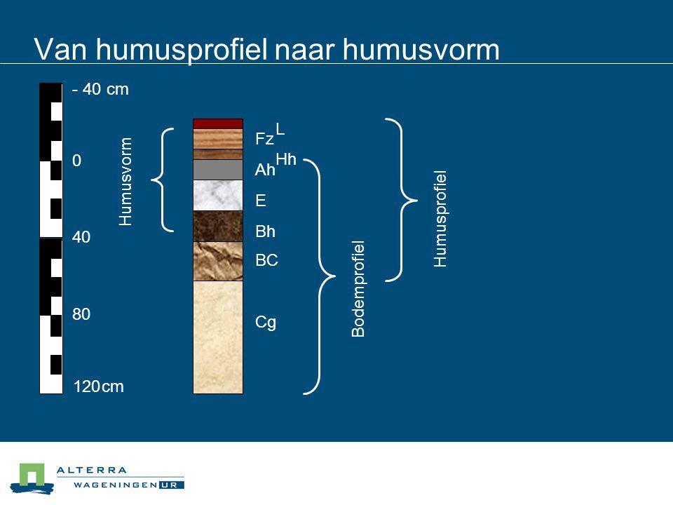 Van humusprofiel naar humusvorm - 40cm 120 cm 0 40 80 Hh BC Ah Bh E Cg Fz L Humusvorm Bodemprofiel Humusprofiel