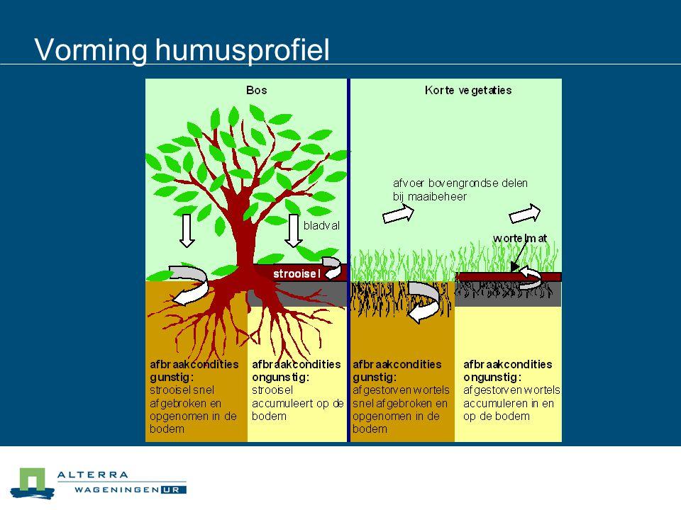Vorming humusprofiel