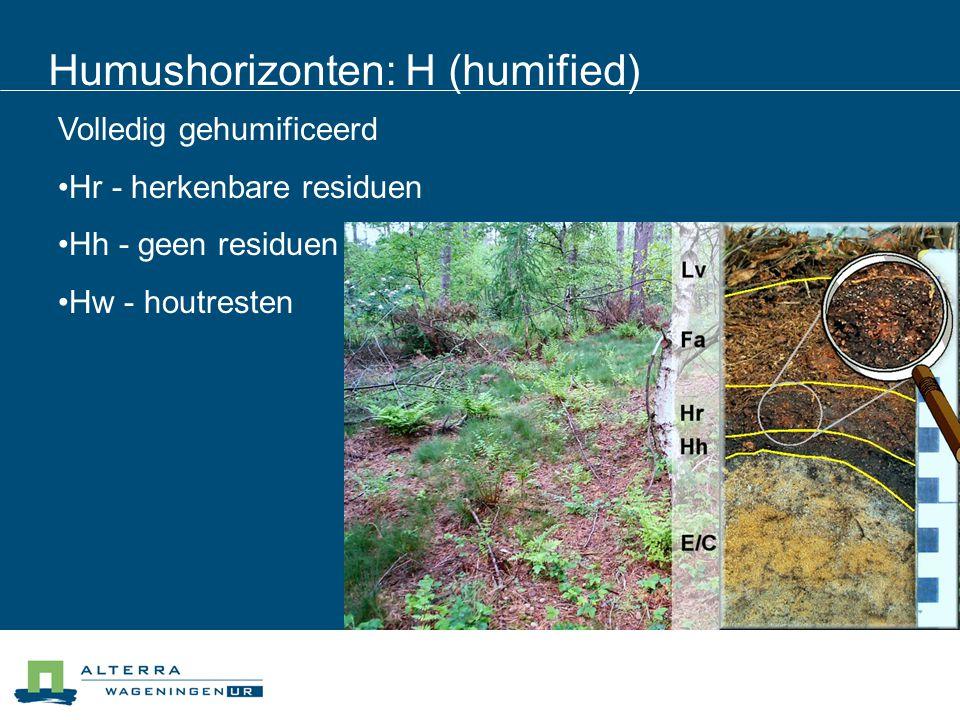 Humushorizonten: H (humified) Volledig gehumificeerd Hr - herkenbare residuen Hh - geen residuen Hw - houtresten