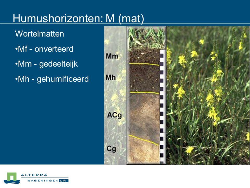 Humushorizonten: M (mat) Wortelmatten Mf - onverteerd Mm - gedeelteijk Mh - gehumificeerd