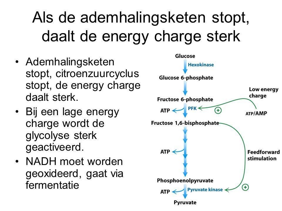 Als de ademhalingsketen stopt, daalt de energy charge sterk Ademhalingsketen stopt, citroenzuurcyclus stopt, de energy charge daalt sterk. Bij een lag