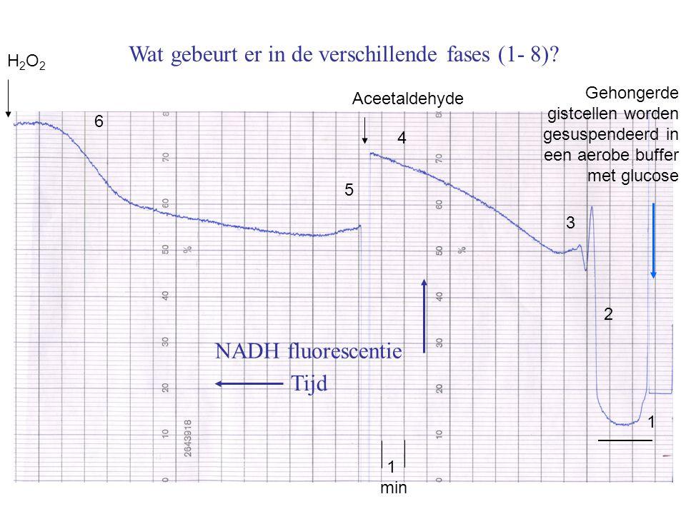 Wat gebeurt er in de verschillende fases (1- 8)? NADH fluorescentie Tijd H2O2H2O2 Aceetaldehyde Gehongerde gistcellen worden gesuspendeerd in een aero
