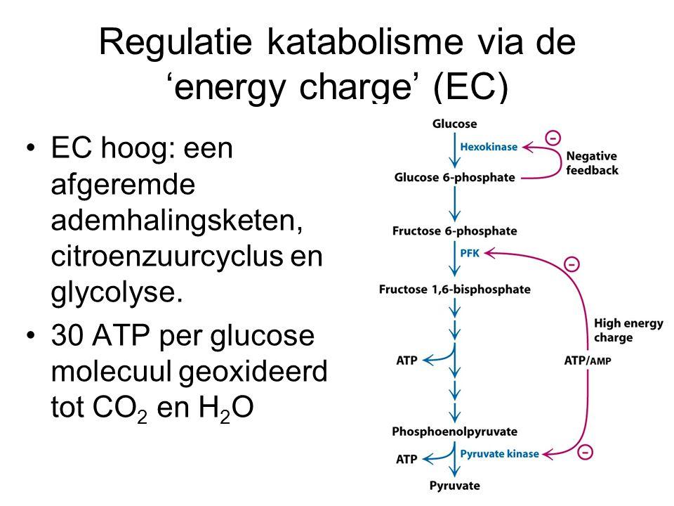 Regulatie katabolisme via de 'energy charge' (EC) EC hoog: een afgeremde ademhalingsketen, citroenzuurcyclus en glycolyse. 30 ATP per glucose molecuul