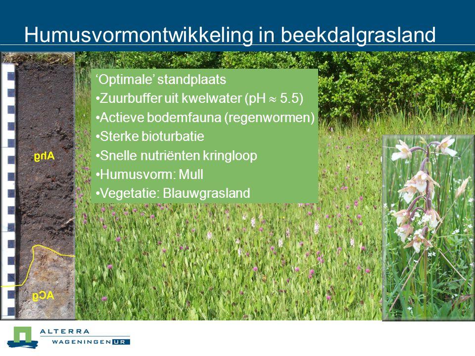 Humusvormontwikkeling in beekdalgrasland 'Optimale' standplaats Zuurbuffer uit kwelwater (pH  5.5) Actieve bodemfauna (regenwormen) Sterke bioturbatie Snelle nutriënten kringloop Humusvorm: Mull Vegetatie: Blauwgrasland